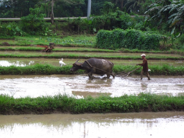 Leveling paddy field in Palawan