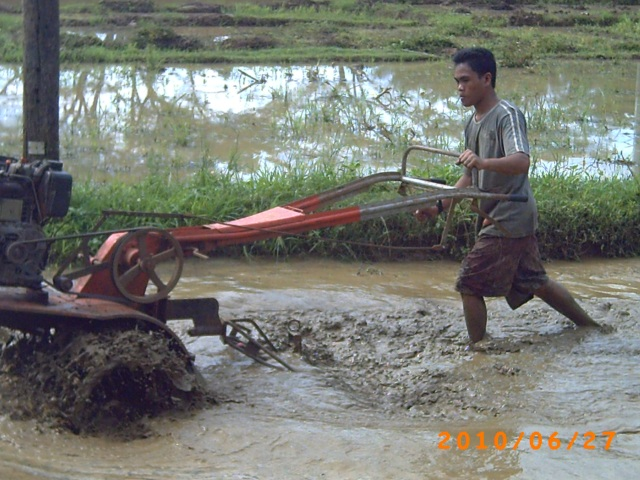 Hand tractor in rice field