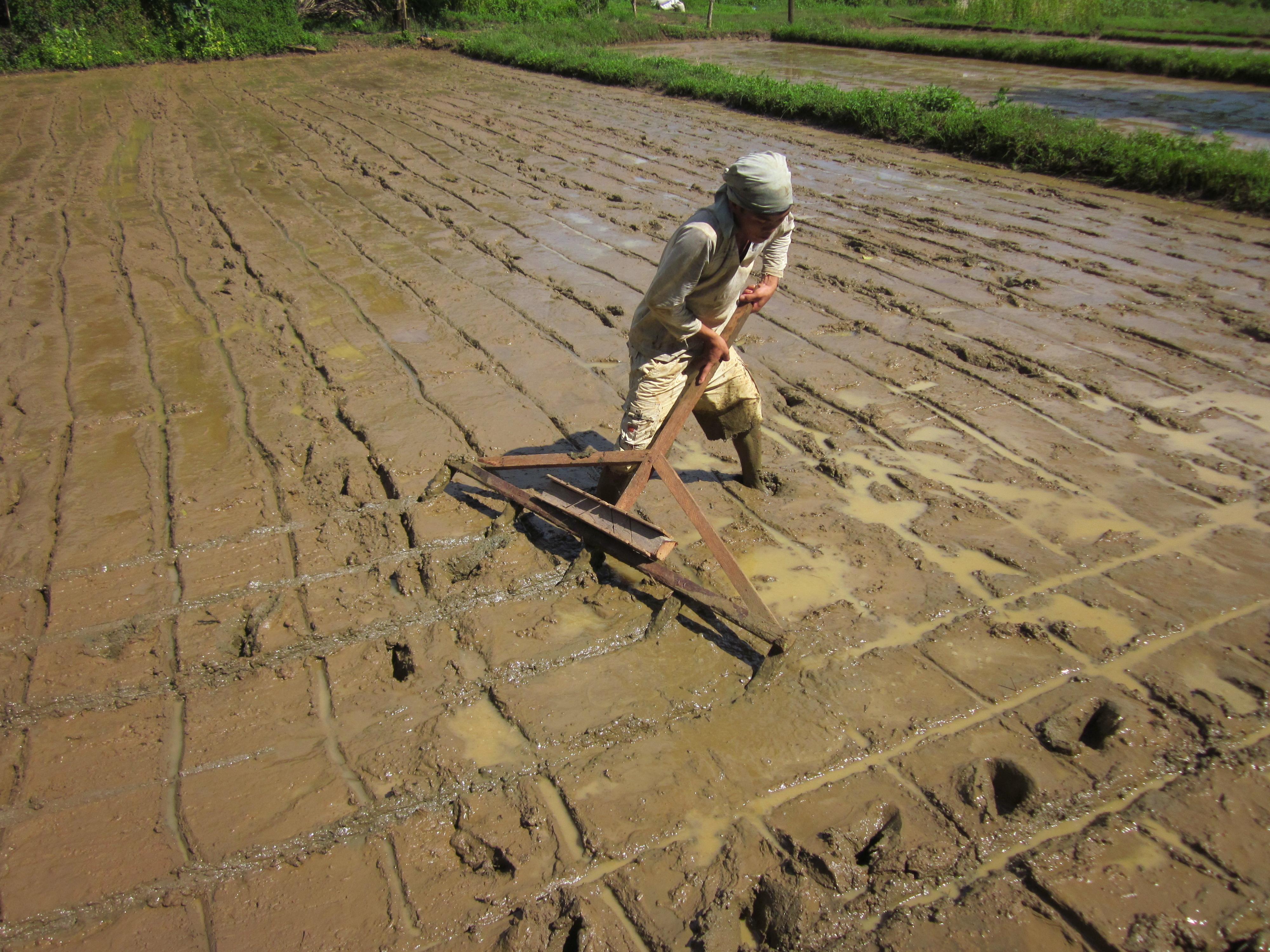 """Planting Rice is never fun"" | Bountifulharvestfarm's Site  ""Planting Ric..."